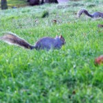 Run squirrel, run!