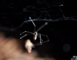 La pomme de pin et l'araignée, la vengence