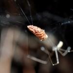The vegan spider