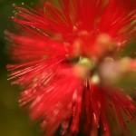 Flowerworks 2