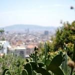 Cactus City