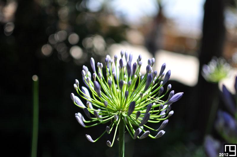 Bouquet discret