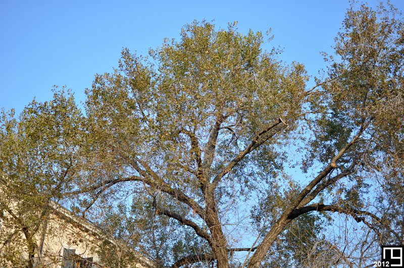 The Tree of Venice