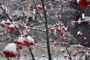 White over Red