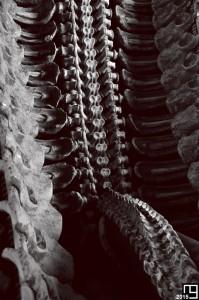 Bones Again