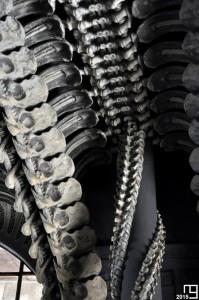 Bones Column