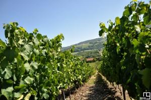 Feel The Good Vines